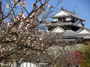松山城 桜